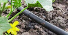 kerti csepegtető rendszer
